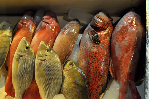 Beautiful fishies