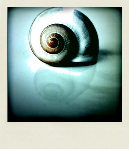 Polarized snail