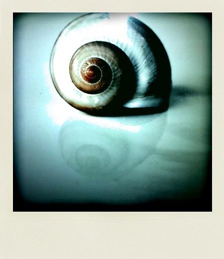 Polarized snail