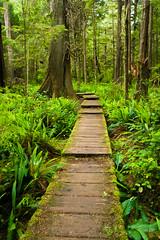 Lush Jungles of Ozette