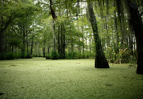 swamp outside of new orleans