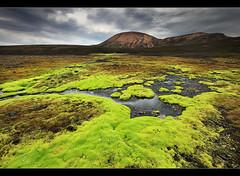 Radioactive Moss - Landmannalaugar, Iceland by orvaratli