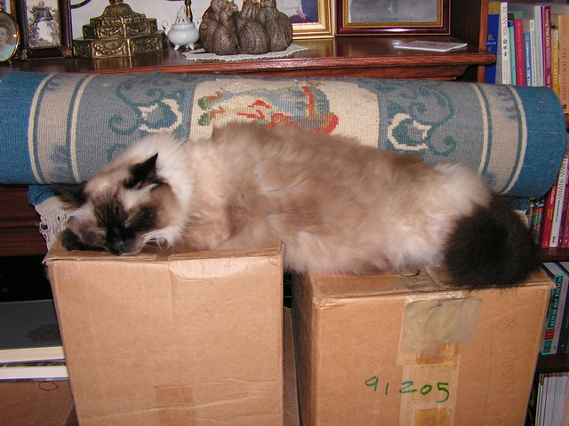 Tantra naps on two uneven boxes