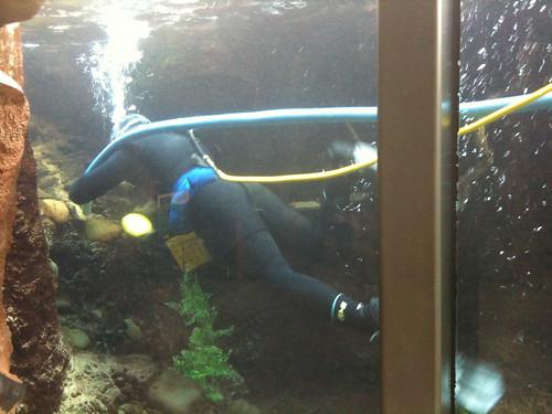 Turtle Bay Aquarium