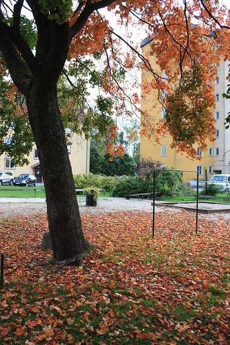 Vackert orange träd med löv även på marken