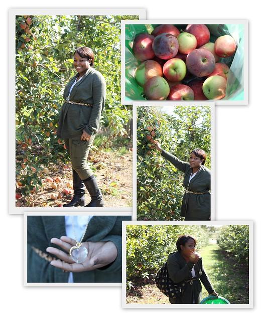 Apple Picking @ Homestead Farm
