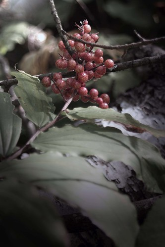 Edited Berries