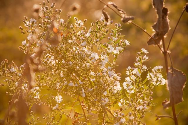 {282/365} wild flowers