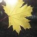 Solens kraft kl.16:36