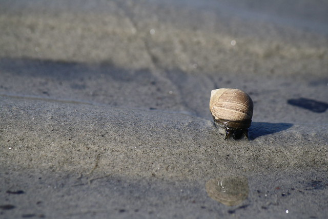 small snail with trail