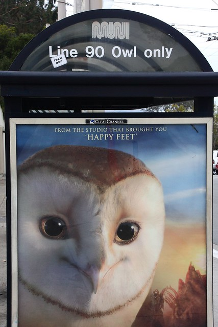 Owl only