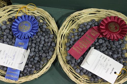 Chowan County Fair - Blueberries