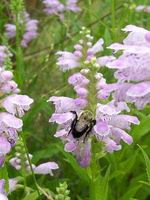 obedient_bumblebee