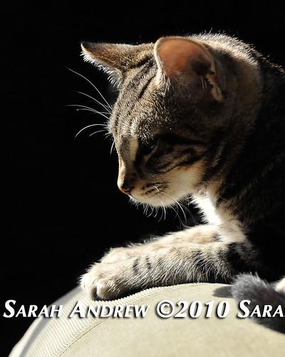 Beatrix Kiddo Andrew: 4/10/10 - 9/23/10