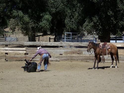 ranch roping #4.9.2010