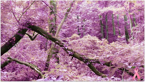 Pink Forest - trees por blmiers2