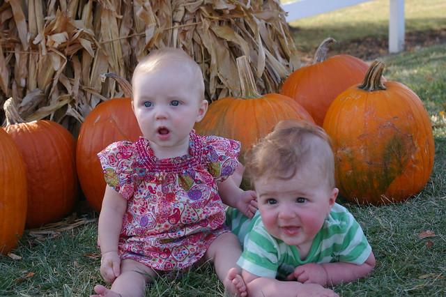 pumpkin patch 059
