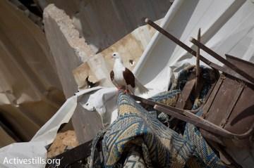 destruction of al arabikh