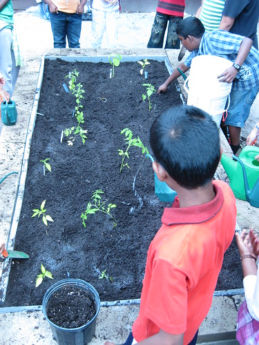 Watering the plants in the earth block bed built by grade 5 students