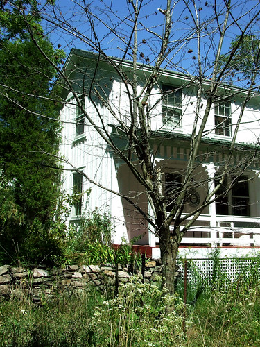 dead cherry tree with porch