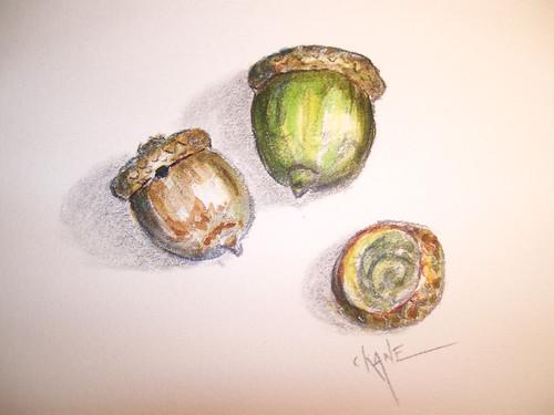 20100908_acorn5