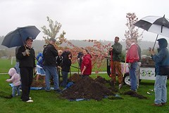 Planting a tree in Spokane Washington, United ...