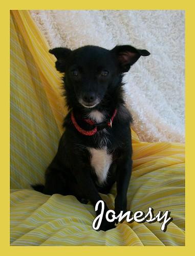 Jonesy002