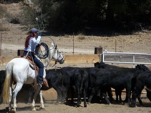 ranch roping #2.9.2010