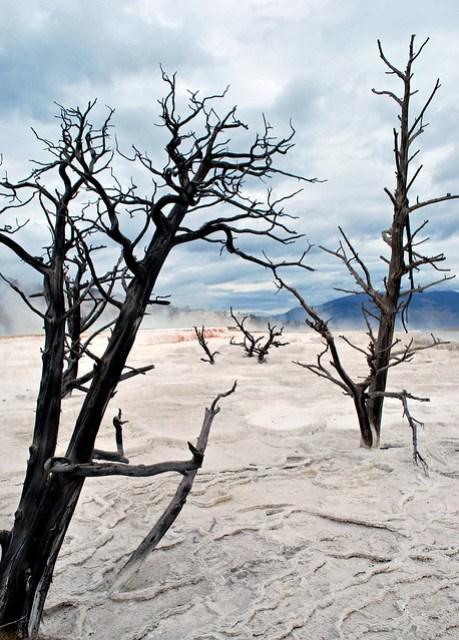 USA_159_Yellowstone_76