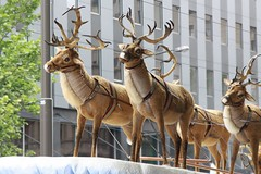 Reindeer at Adelaide Xmas Pageant