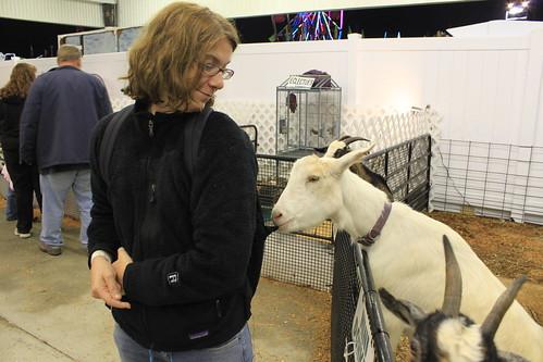 Chowan County Fair - Petting Zoo - Goat Eats Vicky's Bookbag (By Ryan Somma)
