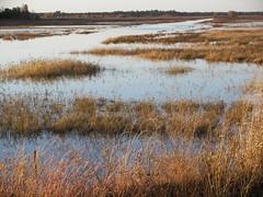 Rynearson wetlands