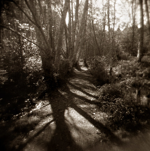 World Toy Camera Day 2010: Forest Path