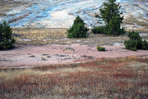 USA_186_Yellowstone_104