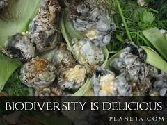Biodiversity is Delicious