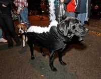 The World's Best Photos of blacklab and costume - Flickr ...