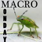 Macro Monday width=