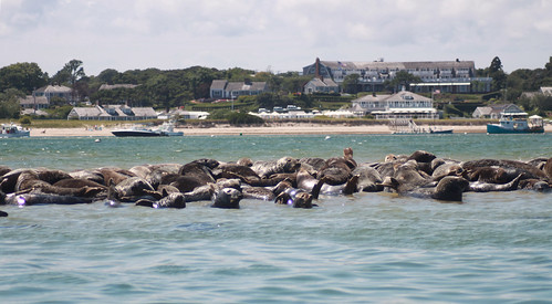 20100803 1405 - Cape Cod - seals - hotel - (by Vicky) - 4867253912_16c7a08772_o