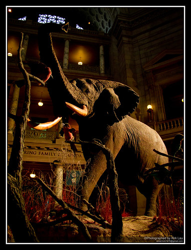 "[Strobist] ""The"" elephant sunset at NMNH"