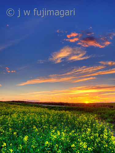 Sunset, Clouds and Canola