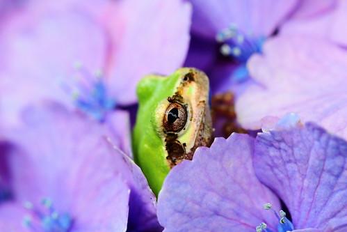 Shh, I'm hiding!