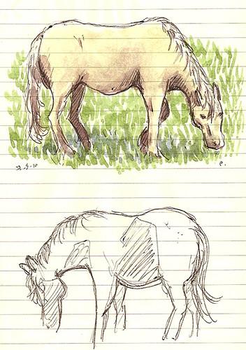 ponies in medford