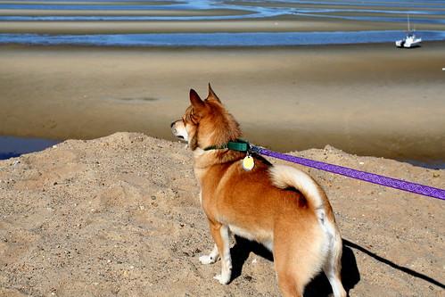 Simon at Thumpertown Beach