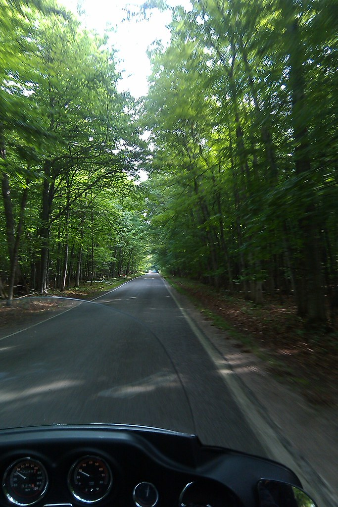 Tunnel of Trees road