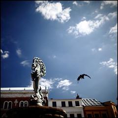 Ystad. Fountain and Jackdraw