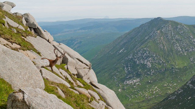 Mountain Goat from Cir Mhor