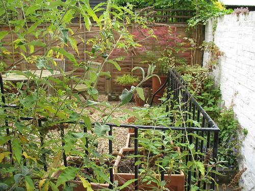 DFB garden