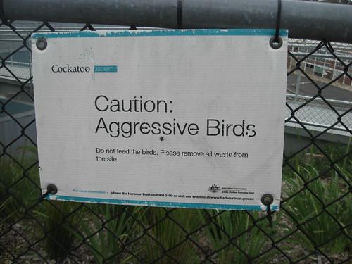 Caution: Aggressive Birds