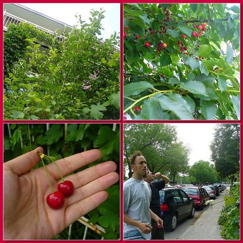 """""""cherries"""