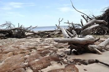 Driftwood and Rocks? at Blackrock Beach - Big Talbot Island State Park, Florida